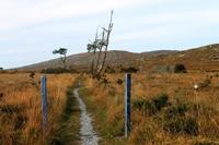 Connemara Path