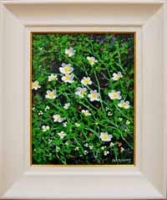 Wildflowers VIII