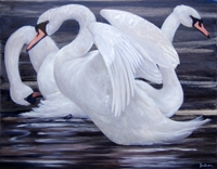 Corrib Swans