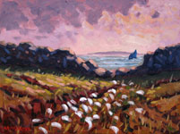 Bog Cotton on Inishlacken - Tony McCarthy