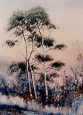 Morning Frost On Pines - James Flack