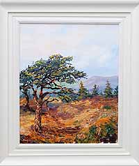 Evening Pine in Mayo