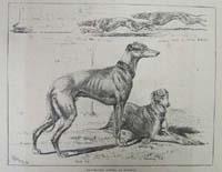 Greyhound racing at Hendon