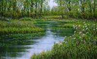 Woodland Pools with Lily Pads,