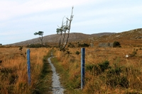 Connemara Path