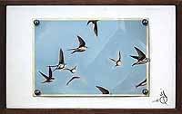 Swallow II