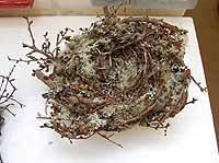 Extra Large Lichen Nest