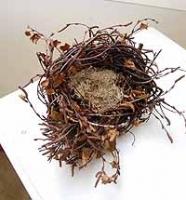 Medium Large Birch Nest With Reindeer Moss