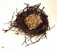 Small Birch Nest With Reindeer Moss