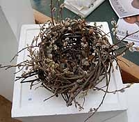 Large Nest Of Wild Willow With Catkins