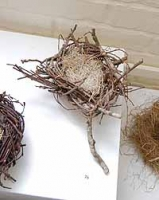Medium Size Wildwillow Nest on a Fork of Wildwillow