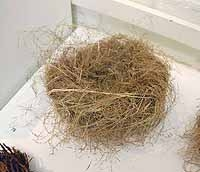 Large Nest of Dried Grass