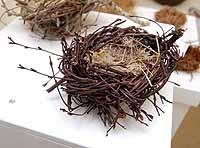 Medium Size Birch Twig Nest with Reindeer Moss