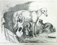 Greyhound and pups