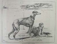 Greyhound racing at Hendon